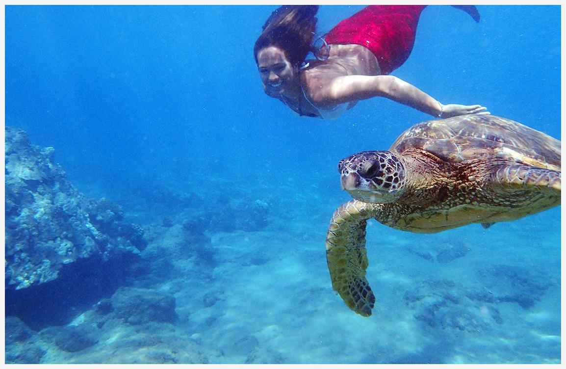 hma mermaid and turtle