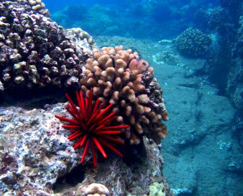 Reef EDIT