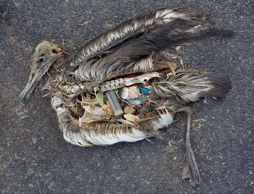 marine debris bird