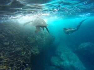 Maui Mermaid
